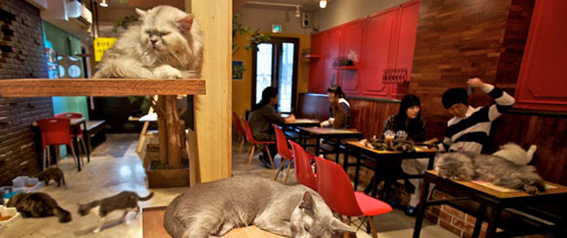 withyourpet_lecafedeschats_101
